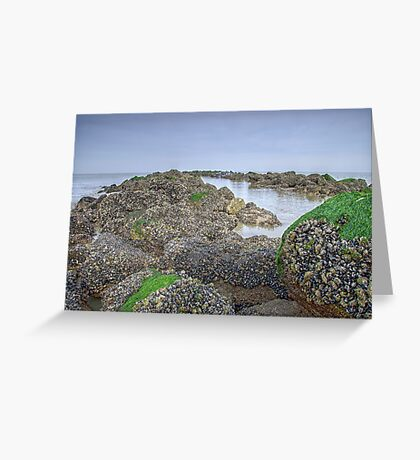 Mussels from Brussels Greeting Card