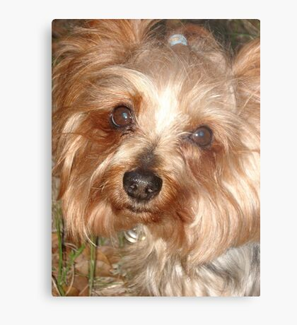 LEFTY, MARCH 17, 2011 Metal Print