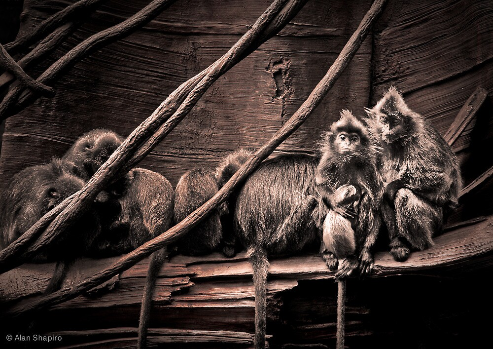 Channeling Dorothea Lange in Indonesia by alan shapiro
