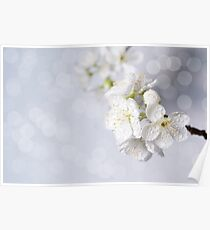 Spring blossoms. Poster