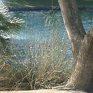 NATURAL BEAUTY- BEAUTY OF WATER & TREES by SherriOfPalmSprings Sherri Nicholas-