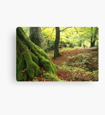 Mossy tree trunk Canvas Print