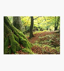 Mossy tree trunk Photographic Print