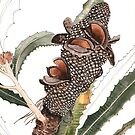 Banksia Pod by blueidesign