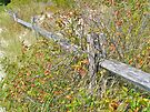 Weathered Fence and Poison Ivy by MotherNature