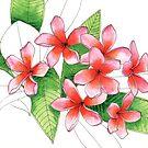 Frangipani Flowers Pink by blueidesign