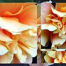 Collage with Double Orange Hibiscus by Madalena Lobao-Tello