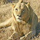 My place-The Sabi Sands Mr.T by Anthony Goldman