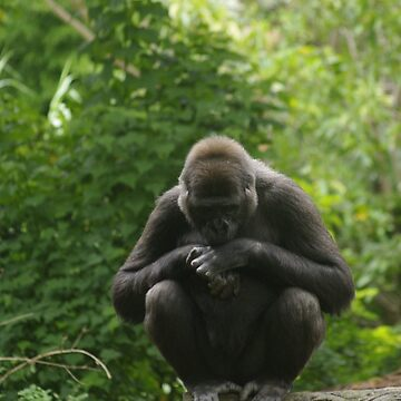 Gorilla in thought by blennus