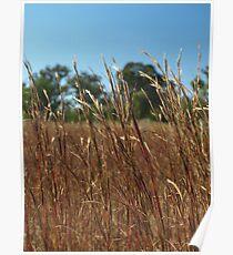 RED GRASSES, MENANGLE NSW  Poster