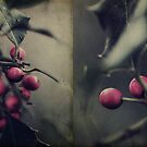 Holly Berries by Nikki Smith (Brown)