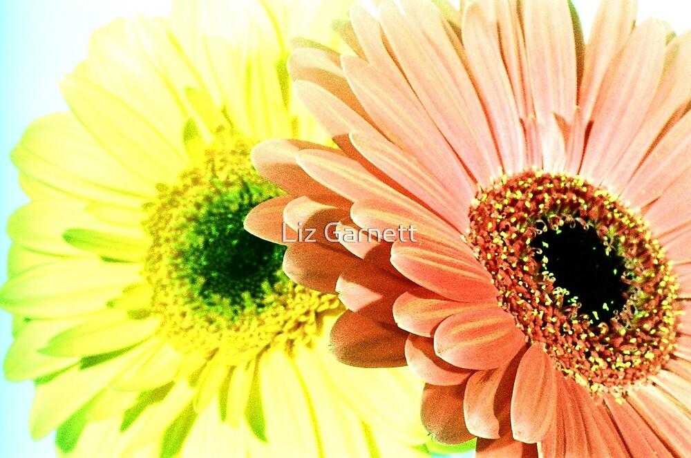 Gerbera Flowers - UK576/23 - www.lizgarnett.com by Liz Garnett