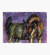 arabian horse Photographic Print
