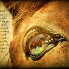 When we think of our horse companions by Myillusions