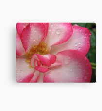 Amusing rose Canvas Print