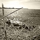 Wheat by the sea shore by BSBenev
