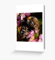 i-Bee-ok Greeting Card