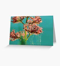 Tela de araña Greeting Card