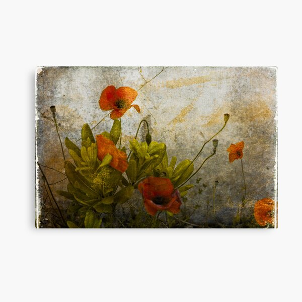 Poppies from Italy Canvas Print