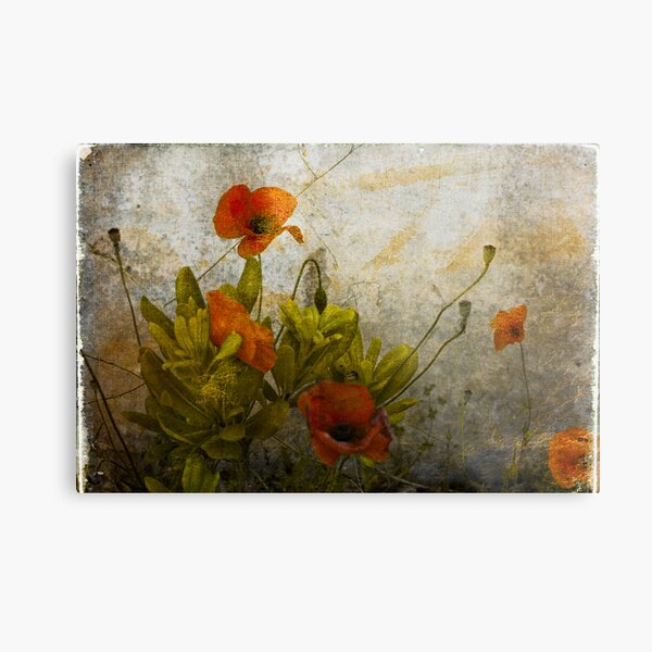 Poppies from Italy Metal Print