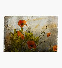 Poppies from Italy Photographic Print