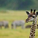 Giraffe in the Rain! by Raymond J Barlow