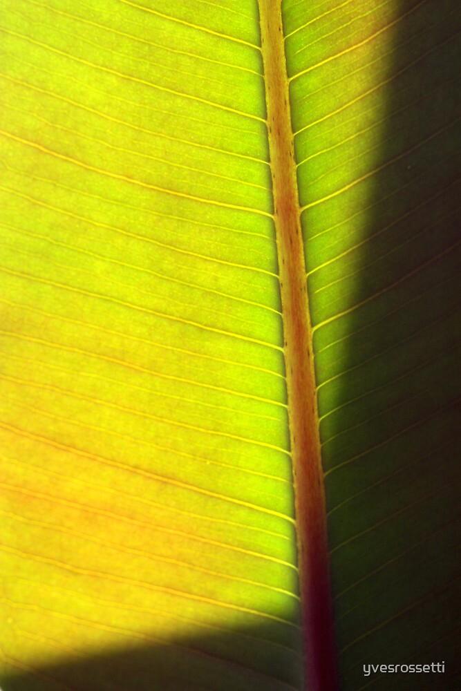 green frame by yvesrossetti