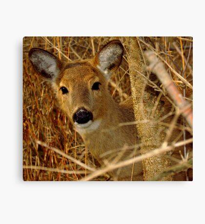 Peek A Boo (White-tailed Deer) Canvas Print