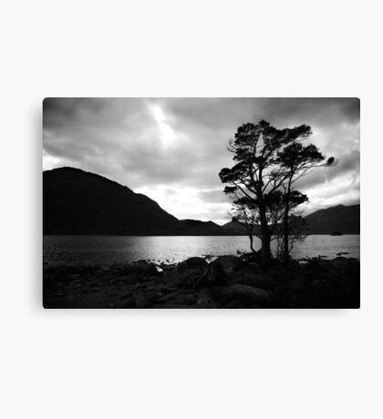 Standing Tree Canvas Print