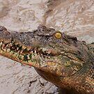 Nesting Croc by tarnyacox