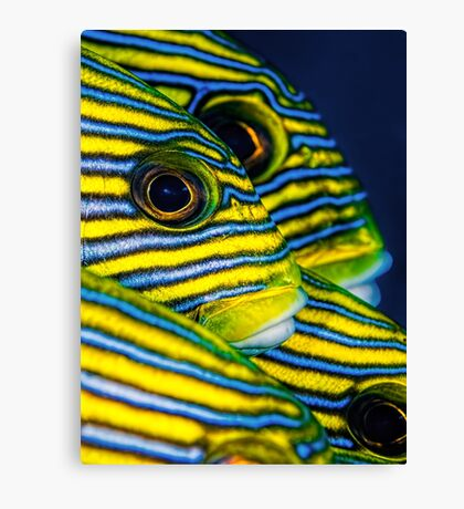 Eyes and Stripes Canvas Print