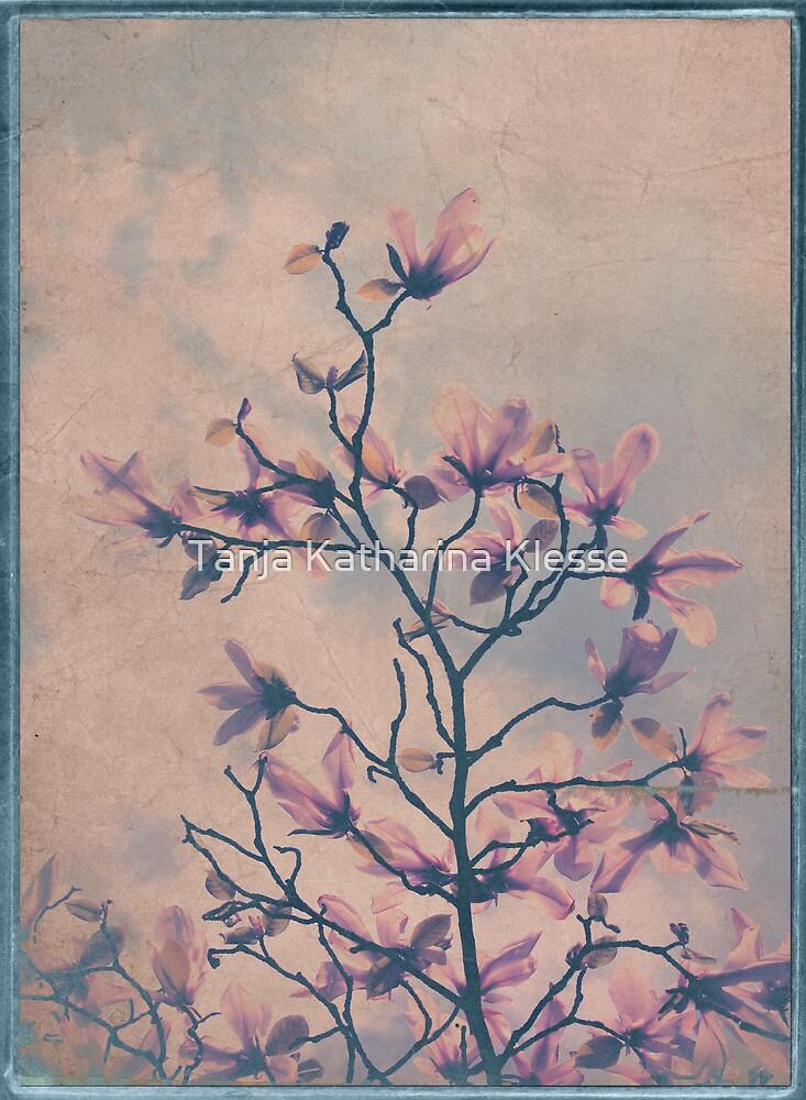 Magnolia dream by Tanja Katharina Klesse