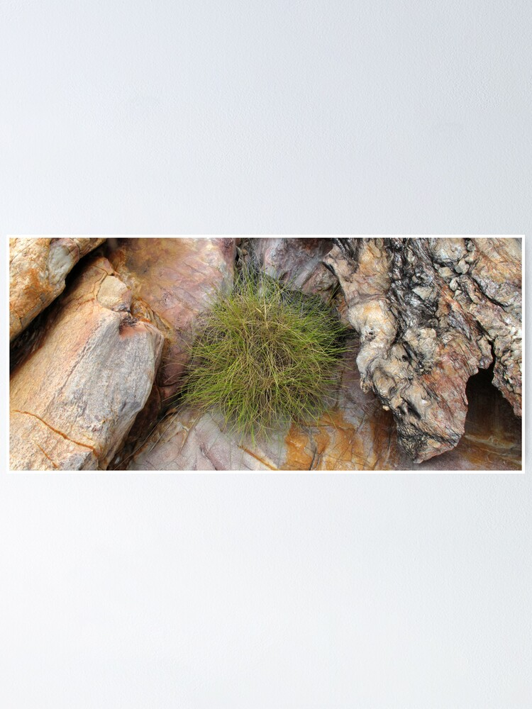 Alternate view of Spinifex Poster
