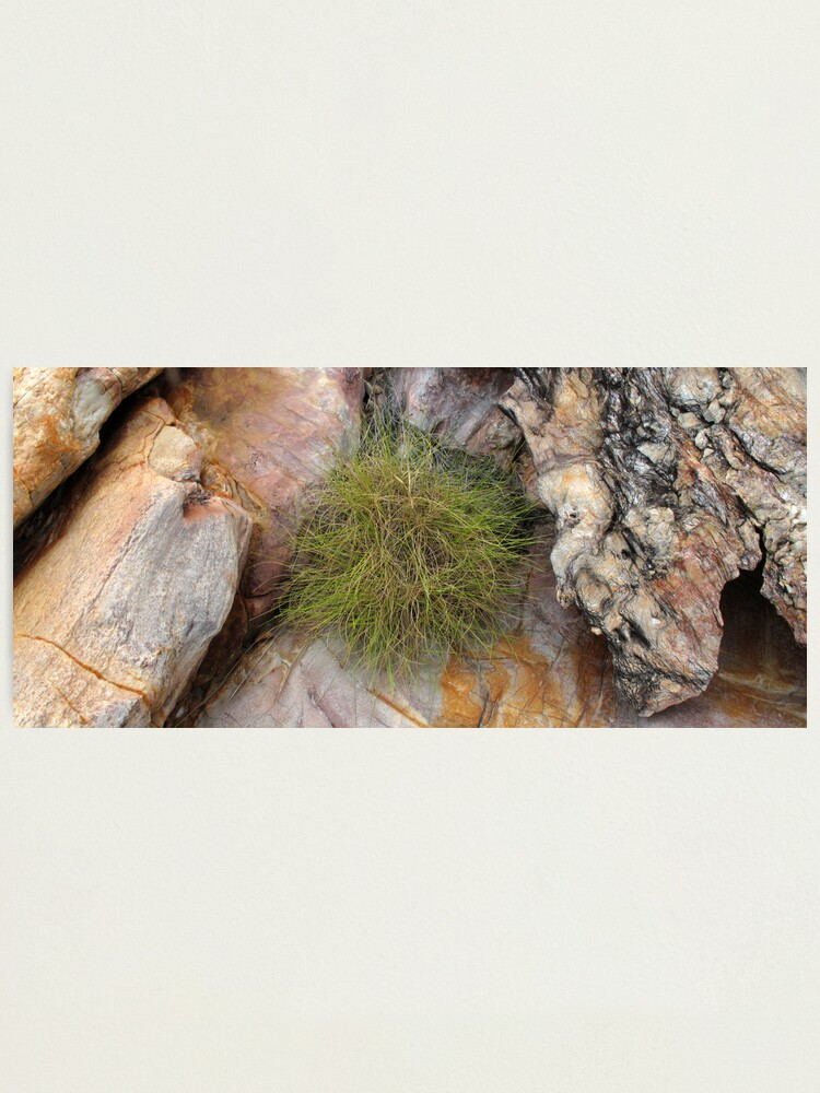 Alternate view of Spinifex Photographic Print