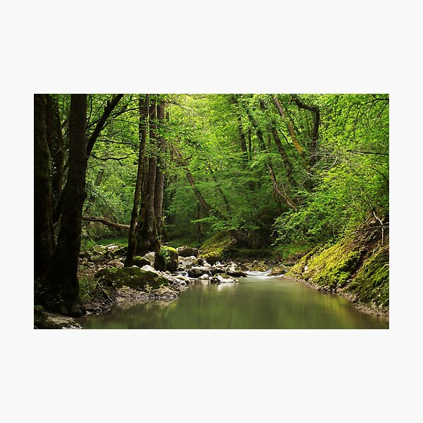 Spingtime greenery along Fornant river Photographic Print