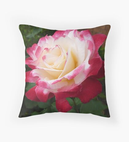 Double Delight as a full bloom Throw Pillow
