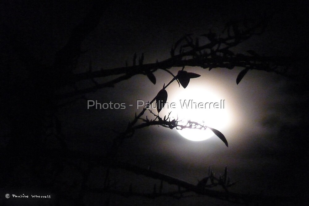 Supermoon 19/3/11 by Photos - Pauline Wherrell