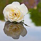My Lady of Shalott by RebeccaWeston