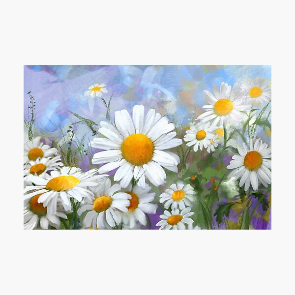 Daisies on misty blue Photographic Print