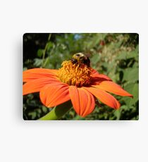 "Dont worry ""bee"" happy :) Canvas Print"