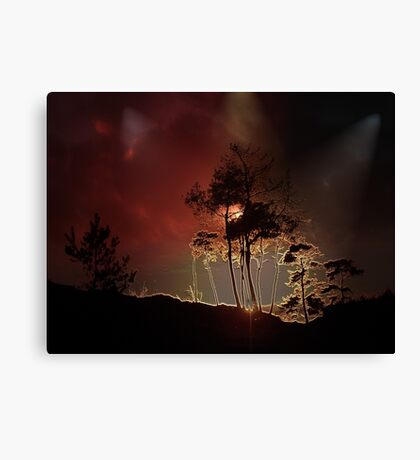 Almost Night Trees Canvas Print