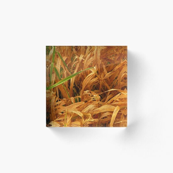In the grasses Acrylic Block
