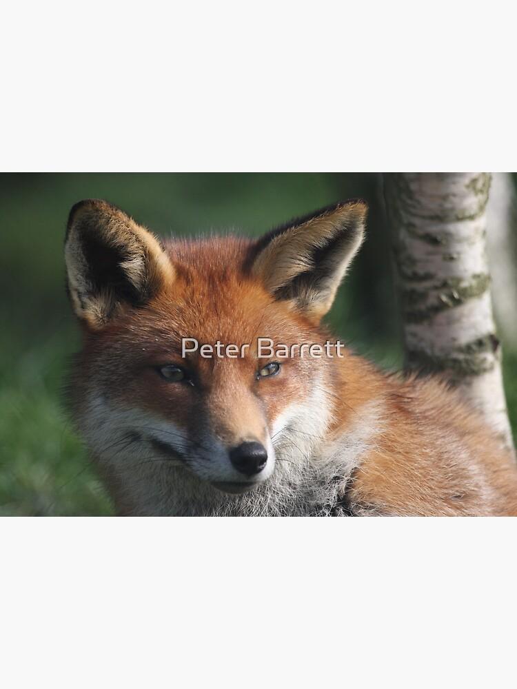 Fox stare by hartrockets