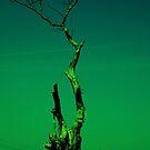old tree by moodywalia