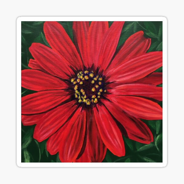 Red African Daisy Flower Sticker