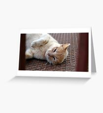 Stray Cat, Corfu. Greeting Card