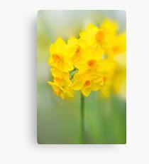 Daffodil Joy Canvas Print