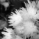 Bouquet  by inglesina