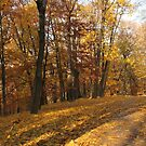 Yellow leaf road by Elena Skvortsova