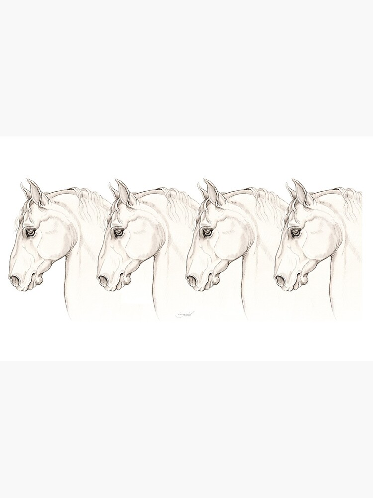 Baroque — Lippizaner Horse Head Study by Toadpony